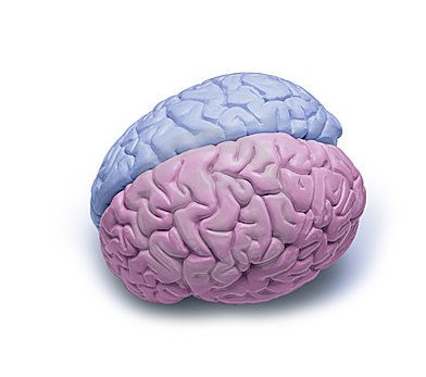 Boy and Girl Brains?